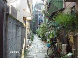 ichiyouyayoi01.JPG