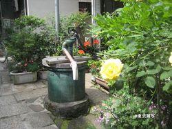kikusaka natsu02.jpg