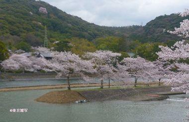 kyotoujisakura01.JPG