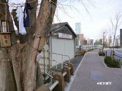 ohanomizu natsu11.JPG