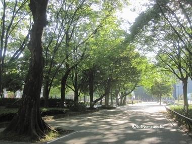 ranposhirakawa01.jpg