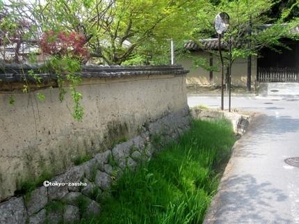 yakushiji&backroad06_Fotor.jpg