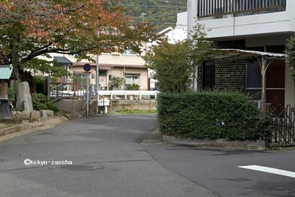 yamashinashiga02.jpg